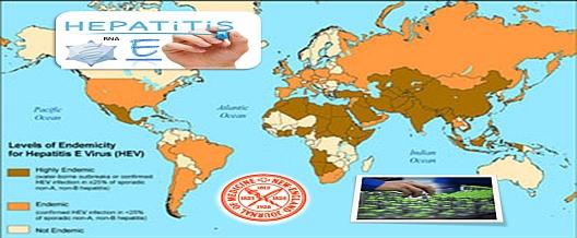 Epatite E. Il vaccino 'cinese' è efficace e protegge a lungo termine