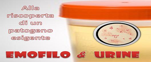 Emofilo & Urine