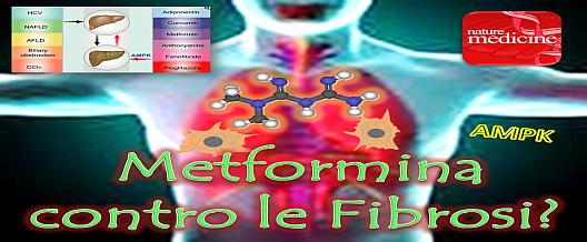 Metformina contro le fibrosi?