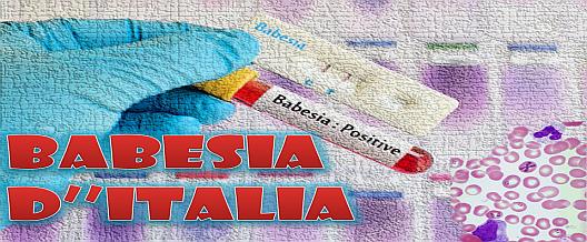 Babesia d'Italia